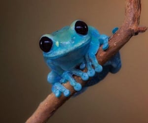 adorable, cute, and blue frog image