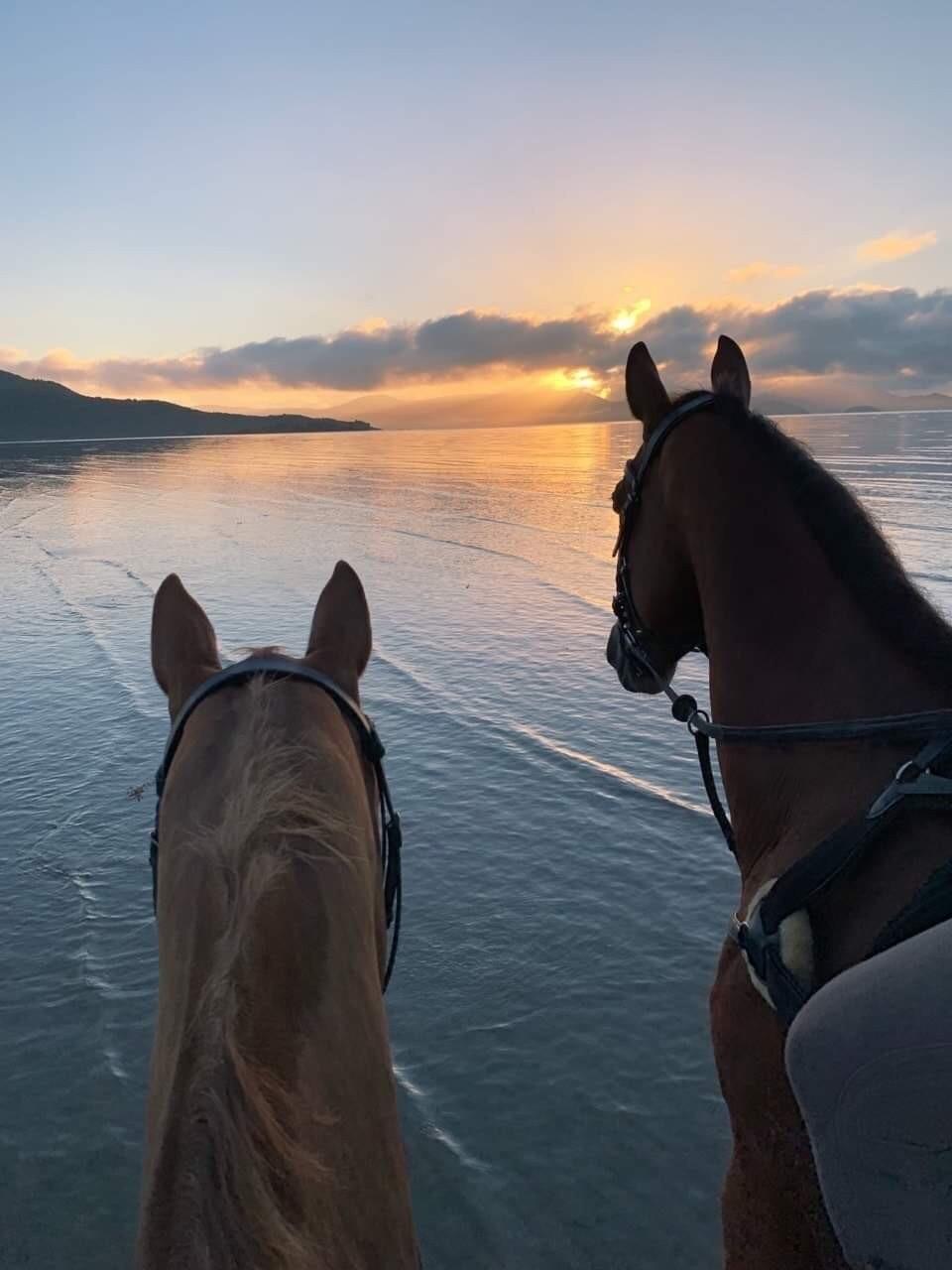 horse, animal, and sunset image