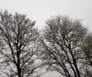 foto, nature, and snow image