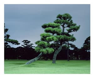 grass, japan, and green image