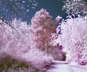 cherry blossom, paisajes, and exteriores image
