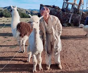 alpaca, rm, and kim seokjin image