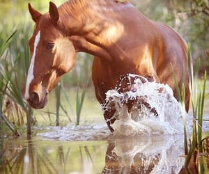horses, ponies, and nature image
