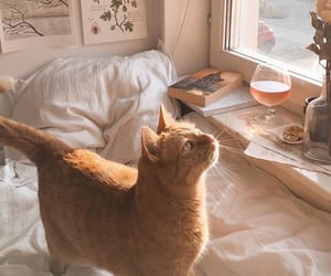 aesthetic, cat, and ginger image