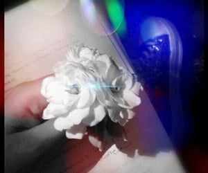 rose, تصاميمً, and صورةً image