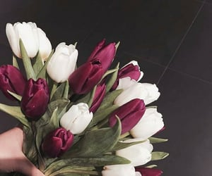 flowers, weheartit, and tulips image