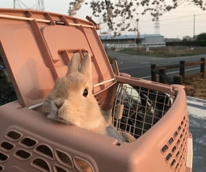 animal, rabbit, and aesthetic image