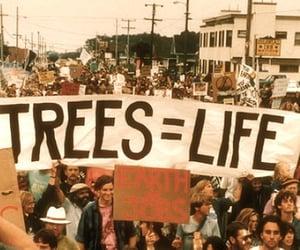 life, tree, and peace image