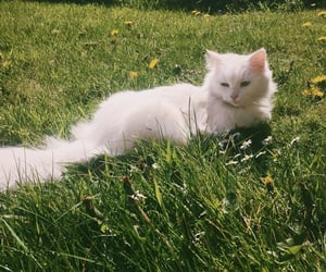 cat, nature, and aesthetic image