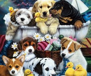 animal, animals, and pets image