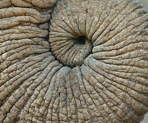 elefant, russel, and spirale image