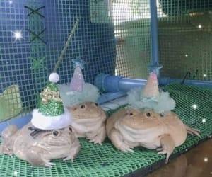 frog, animal, and aesthetic image
