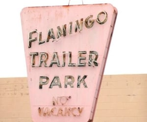pink, flamingo, and vintage image