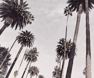 chill, clouds, and palm trees image
