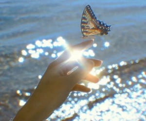 butterfly, aesthetic, and beauty image