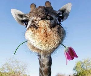 animal, love, and giraffe image