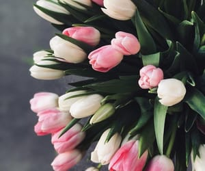 flowers, tulip, and tulips image
