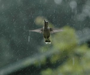 rain, bird, and photography image