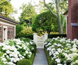garden, house, and flowers image