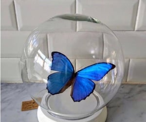 blue, butterfly, and globe image