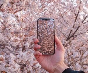 sakura and spring image