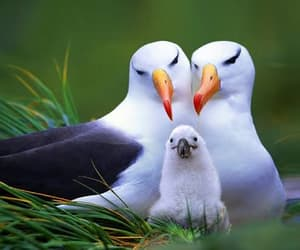 bird and family image