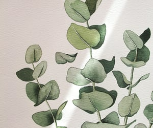 artwork, eucalyptus, and sketching image