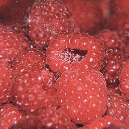 fruit, raspberry, and red image