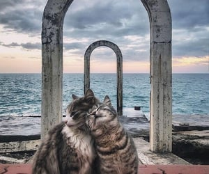 aesthetic, cute, and cat image
