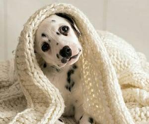 animals, black and white, and dog image