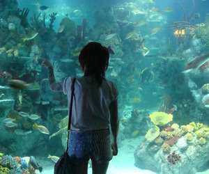 aquarium, fish, and girl image