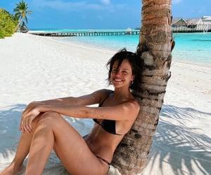 beach, palm tree, and tropical image