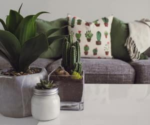 home decor, home interior, and natural elements image