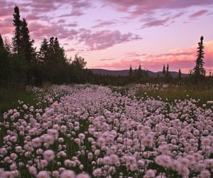 pink, nature, and flowers image