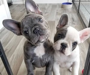dogs, animals, and cute image