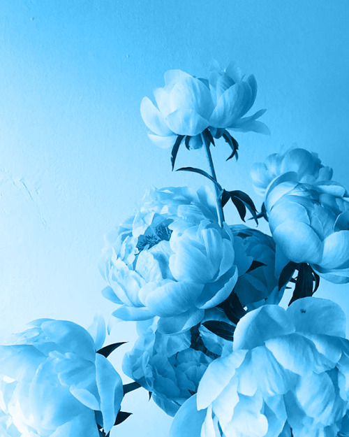 aesthetic, floral, and pale blue image