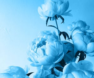 aesthetic, flowers, and pastel blue image