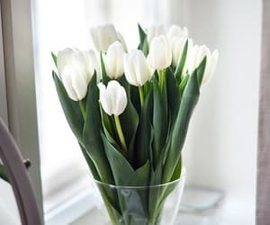 white, flowers, and tulips image