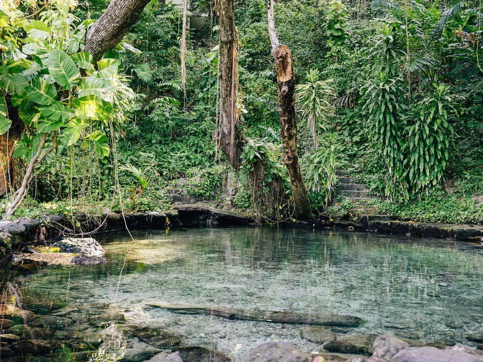 nature beautiful tropical image