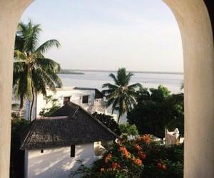 beach, marbella, and palmtrees image