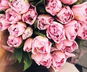 flowers, pink, and march image