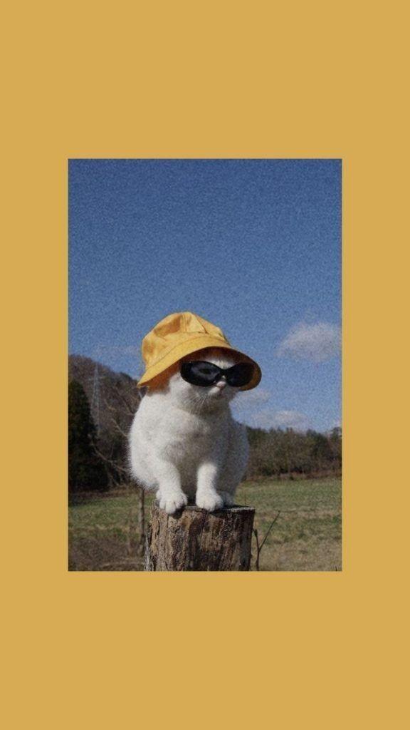 Cat In A Bucket Hat On We Heart It