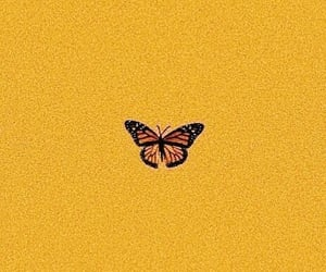wallpaper, butterfly, and yellow image