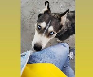 dog, snapchat, and love image