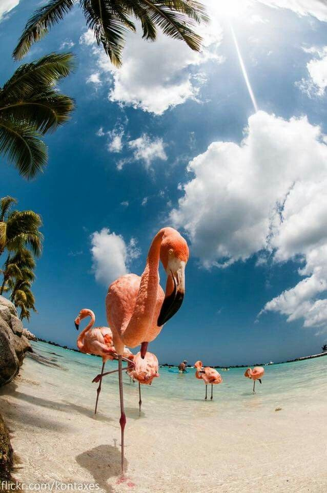 animals, beach, and countries image