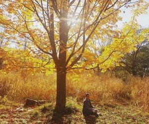 automn, season, and sun image