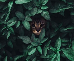 wallpaper, cat, and green image