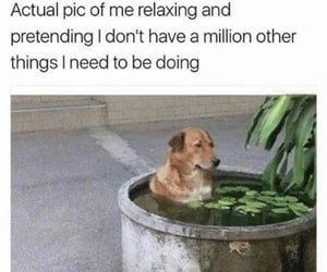 dog, funny, and haha image
