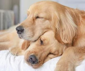 adorable, cute dog, and doggies image