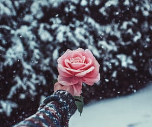 snow, winter, and rose image